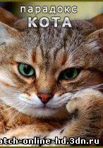 Парадокс кота смотреть онлайн 18.03.2013 / ТВЦ бесплатно онлайн