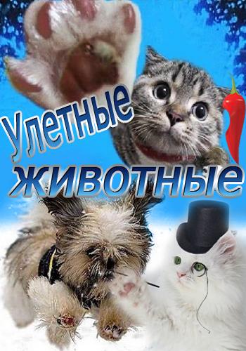 Улетные животные 53 / 54 выпуск 18.03.2013 смотреть онлайн Перец ТВ